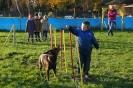 Hunde AG 2014
